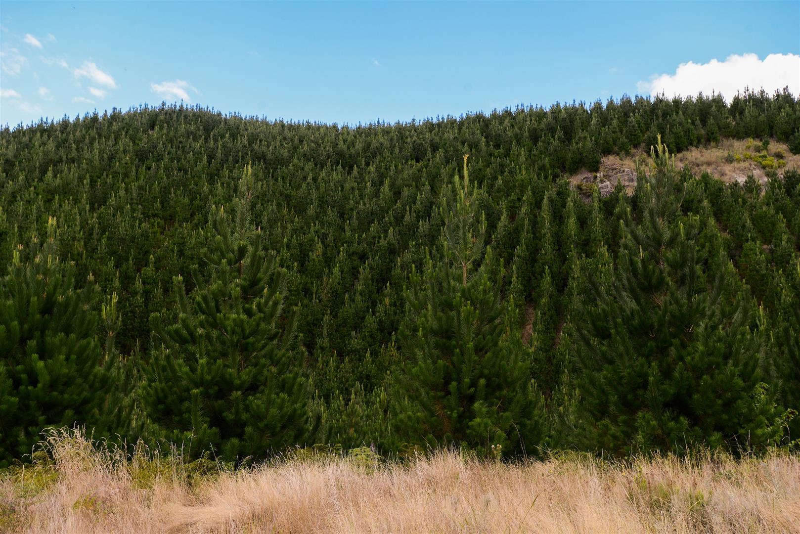 1150 Broadlands Road, Taupo, Unknown, Waikato